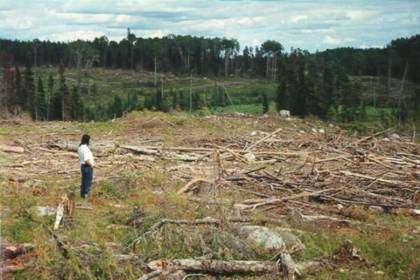 La Deforestacion Causas y Consecuencias Tala Indiscriminada ...