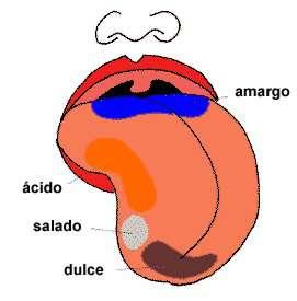 Resultado de imagen de El olfato humano