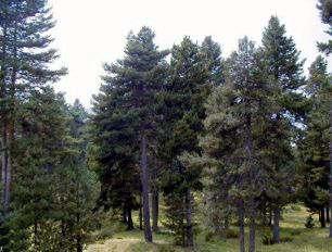 Recursos forestales los bosques deforestacion recursos for Plantas forestales