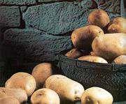 agricultura en argentina