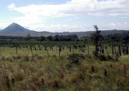Biomas de Argentina Pastizales