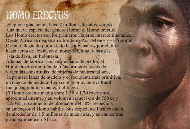 caracteristicas del homo erectus  y fecha de su vida