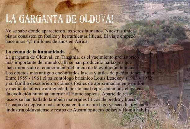 Garganta de Olduvai:Descubrimientos de Restos del Homo Habilis