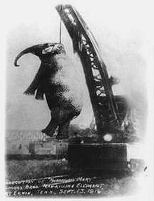 elefante electrocutado