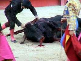 Torero y toro caido