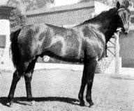 caballo de carrera argentino, Yatasto