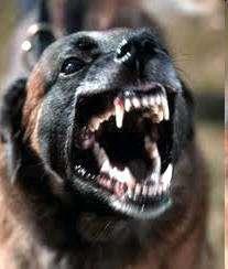 perro rabioso
