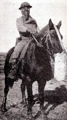 Equipo completo de protector de la caballería