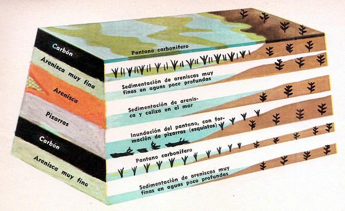 formacion del carbon, corte del terreno