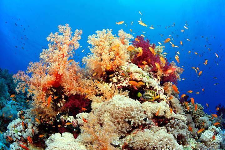 coral bajo el mar