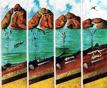 formación fósil