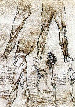ANATOMIA, Leonardo Da Vinci