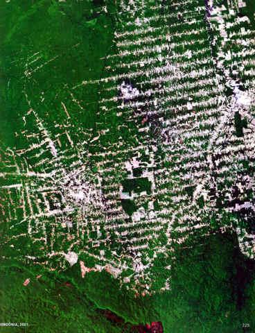 2001:RONDONIA BRASIL AMAZONAS DEFORESTACION
