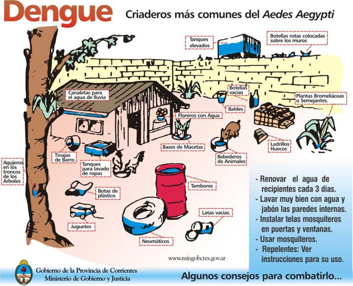 dengueas7.jpg