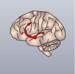 cerebro y las drogas