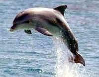 mamiferos delfin