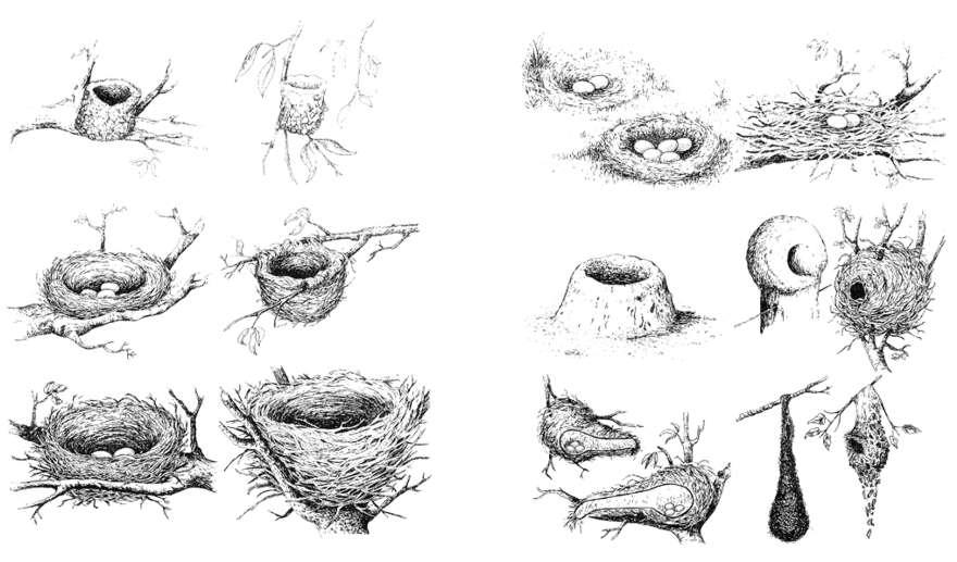 nidos de pajaros
