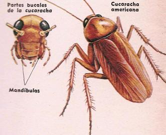 Insectos que Transmiten Enfermedades al Hombre:Tipos de Patologias –  BIOGRAFÍAS e HISTORIA UNIVERSAL,ARGENTINA y de la CIENCIA
