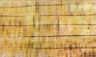 madera arce