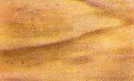 madera tilo