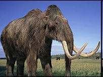 Extincion de la Megafauna