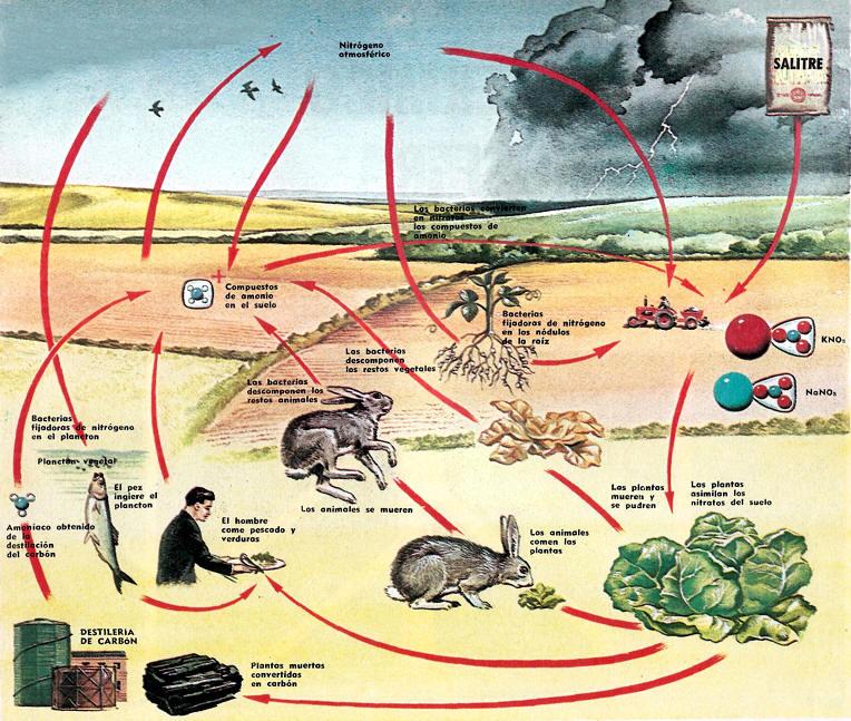 Resultado de imagen de La importancia del hidrógeno para la vida