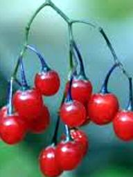 plantas-veneosas