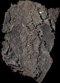 muestra roca madre