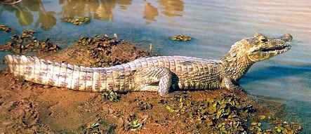 reptil, la vida en el planeta