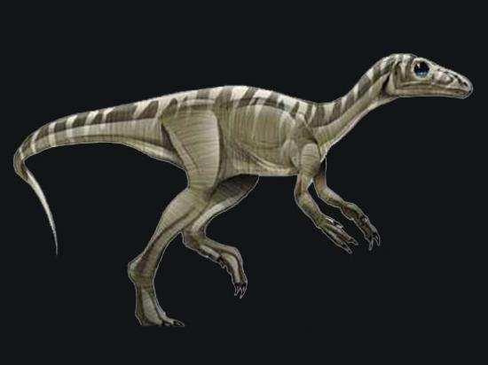 dinosaurios Eoraptor lunensis