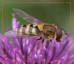 vida de los insectos abeja