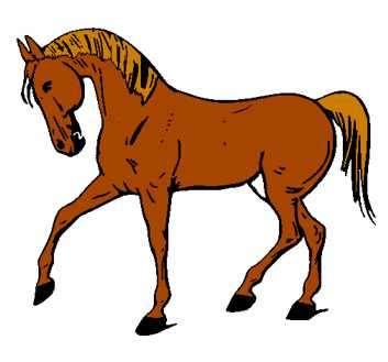 caballo anecdota