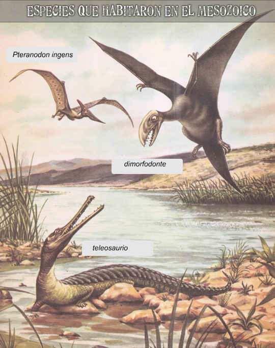 animales que habitaron el mesozoico