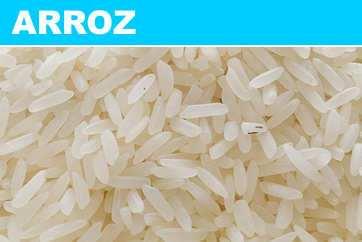 arroz: alimento fundamental para la vida del hombre