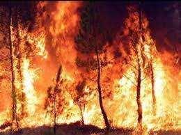 El incendio de un bosque genera decena de muertes