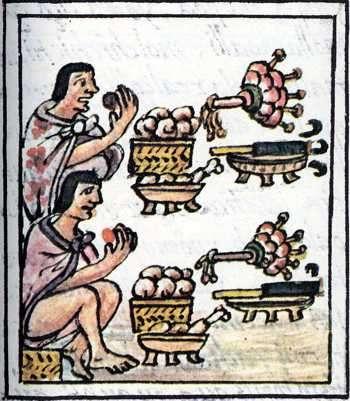aztecas cacao