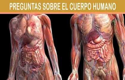 la temperatura corporal del ser humano