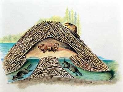 cueva de castores