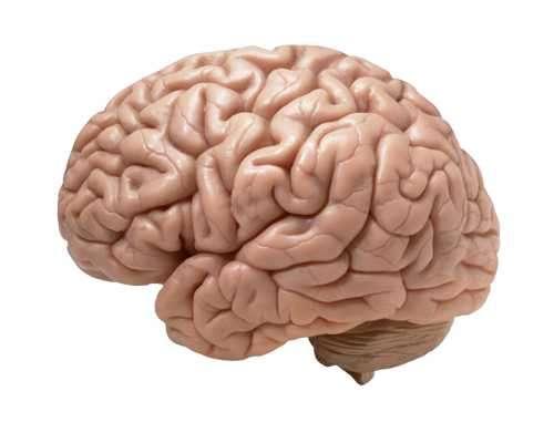 cerebro y la falta de oxigeno