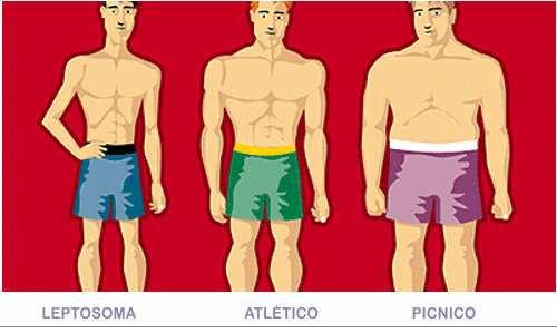 tipos de cuerpos: leptosoma, atletico y picnico