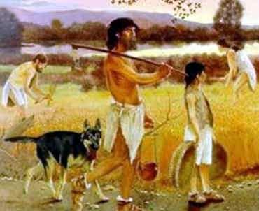 domesticacion de animales