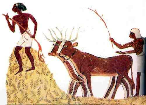 la ganadería en egipto antiguo