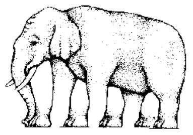 elefante, gestalt