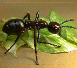 vida de los insectos hormiga