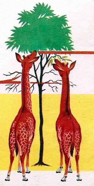 jirafas comiendo