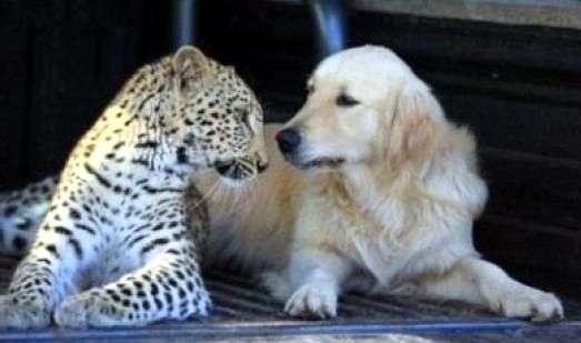 valor humano lealtad