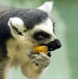 animal comiendo frutas