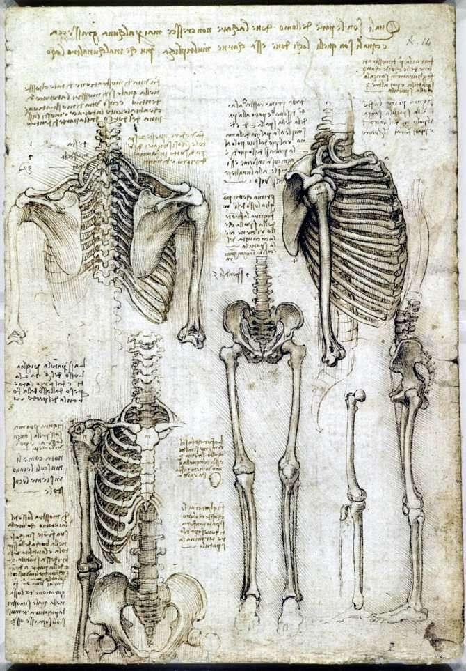 esqueleto de leonardo da vinci anatomista