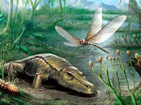 libelula gigante del periodo carbonifero