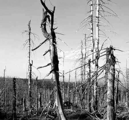 Impacto de la lluvia ácida en un bosque
